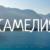 Картинки С Именем КАМЕЛИЯ